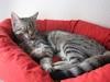 Katzen Ruheplätze