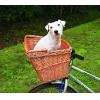 Hunde Unterwegs, Transport