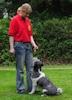 Hunde Erziehung, Training, Sport