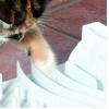 Trixie Cat Activity Fun Board, 30 × 40 cm